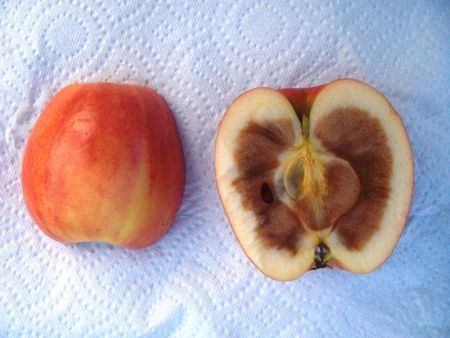 an-apple-rotten-on-the-inside